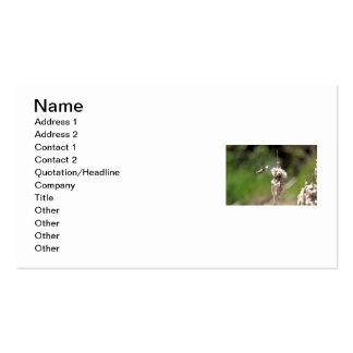 Colibrí que construye una jerarquía tarjeta personal