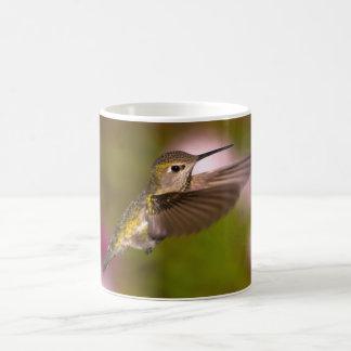 Colibrí que vuela la taza del colibrí de Ana