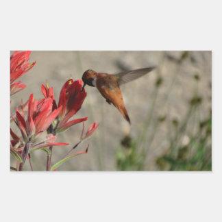 Colibrí rojo del wildflower pegatina rectangular