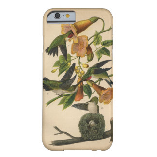colibrí Rubí-throated 1890 Funda Barely There iPhone 6