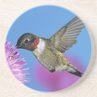 colibrí Rubí-throated, Archilochus 4 Posavaso Para Bebida