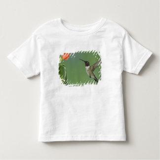 colibrí Rubí-throated, Archilochus Tee Shirt