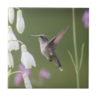 colibrí Rubí-throated Azulejo Cuadrado Pequeño