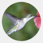 colibrí Rubí-throated (femenino) con la petunia Etiqueta Redonda