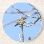 colibrí Rubí-throated Posavasos Manualidades