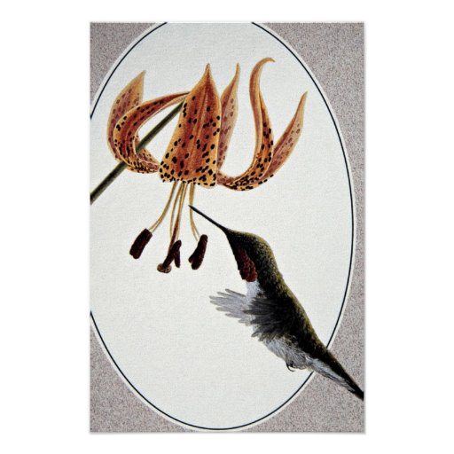 colibrí Rubí-throated Póster