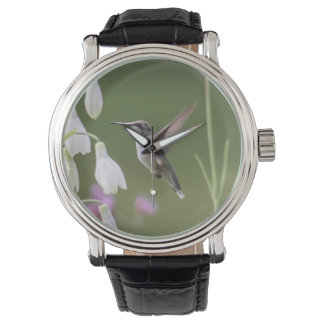 colibrí Rubí-throated Relojes De Mano
