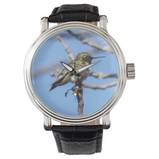 colibrí Rubí-throated Relojes De Pulsera