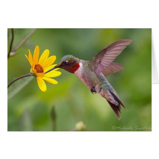 colibrí Rubí-throated Tarjeta De Felicitación