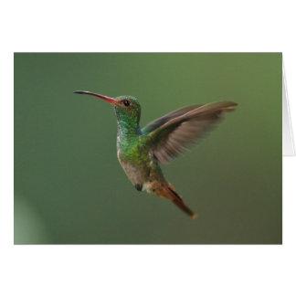 colibrí Rufo-atado Tarjeta De Felicitación