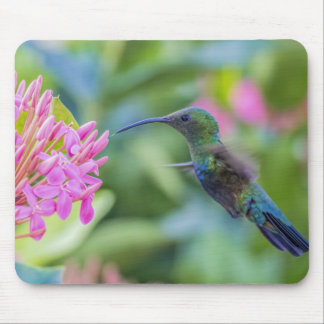 Colibrí Throated verde Mousepad del Carib