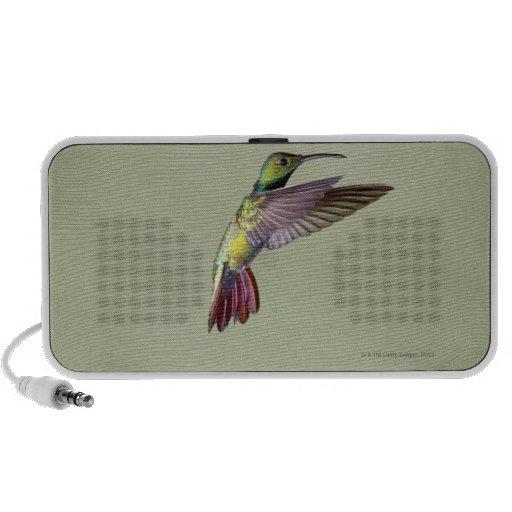 Colibrí Verde-breasted Anthracocorax 2 del mango Notebook Altavoz