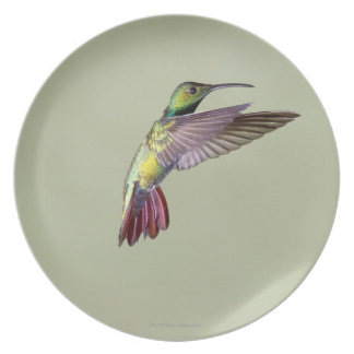 Colibrí Verde-breasted Anthracocorax 2 del mango Plato