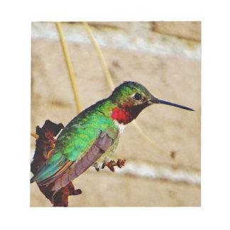 Colibrí verde de rubíes bloc de papel