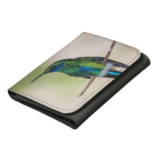 Colibrí verde del Violeta-oído