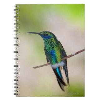 Colibrí verde del Violeta-oído Libreta