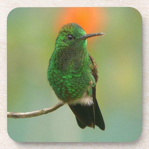 Colibrí verde posavaso