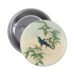 Colibrí verde y azul de Gould Pin