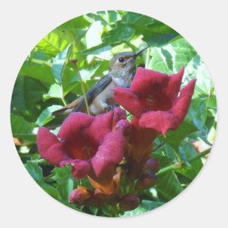 Colibrí y flor de trompeta roja pegatina redonda