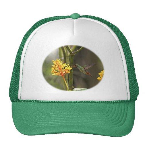 Colibrí y flor tropicales gorras