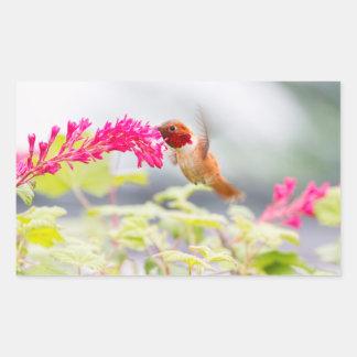 Colibrí y flores del vuelo pegatina rectangular