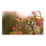 Colibrí y flores plantillas de tarjetas personales