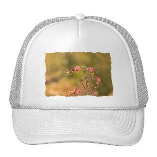 Colibrí y flores rosadas gorra
