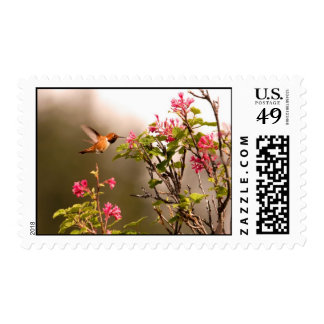 Colibrí y flores sellos postales