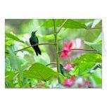Colibrí y flores tropicales