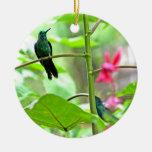 Colibrí y flores tropicales adorno
