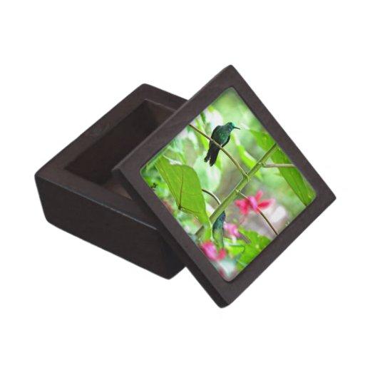 Colibrí y flores tropicales cajas de joyas de calidad