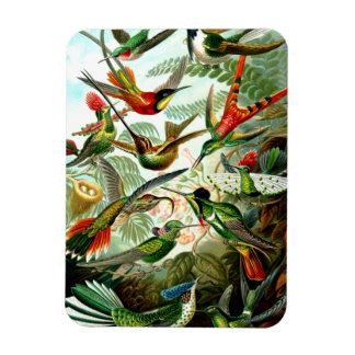 Colibríes 1904 de Ernst Haeckel. Imanes