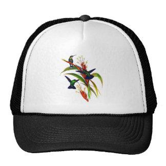 Colibríes coloridos exóticos gorras de camionero