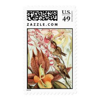 Colibríes con las orquídeas sello