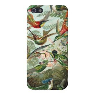 Colibríes de Haeckel iPhone 5 Fundas
