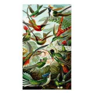 Colibríes de Haeckel Tarjetas De Visita