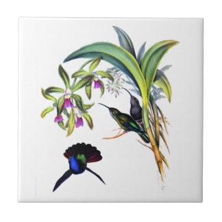 Colibríes hermosos y orquídeas púrpuras azulejo cuadrado pequeño