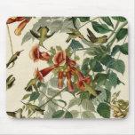 Colibríes Throated de rubíes de Audubon Tapete De Raton