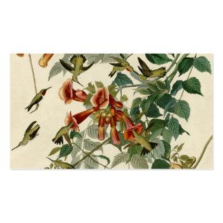 Colibríes Throated de rubíes de Audubon Tarjetas De Visita