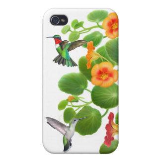 Colibríes Throated de rubíes en iPhone de las capu iPhone 4/4S Carcasas