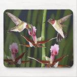 Colibríes y floraciones tapetes de ratones