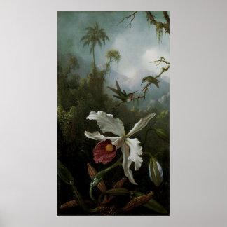Colibríes y orquídea blanca de Martin J. Heade Póster