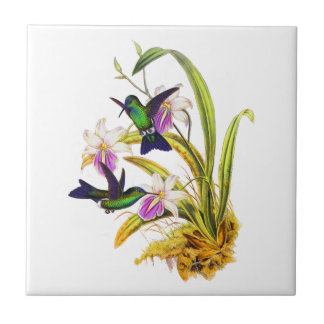 Colibríes y orquídeas púrpuras azulejo cuadrado pequeño