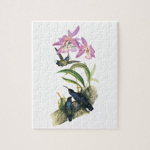 Colibríes y orquídeas rosadas puzzles con fotos