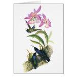 Colibríes y orquídeas rosadas tarjeta