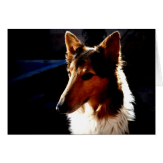 colie calm  dog greeting card