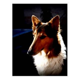 colie calm  dog postcard