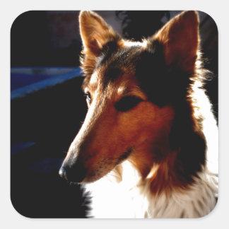 colie calm  dog square sticker
