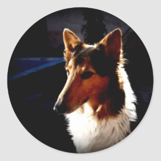 colie calm  dog classic round sticker