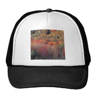 Colina colorida del otoño de los árboles de la nat gorro de camionero